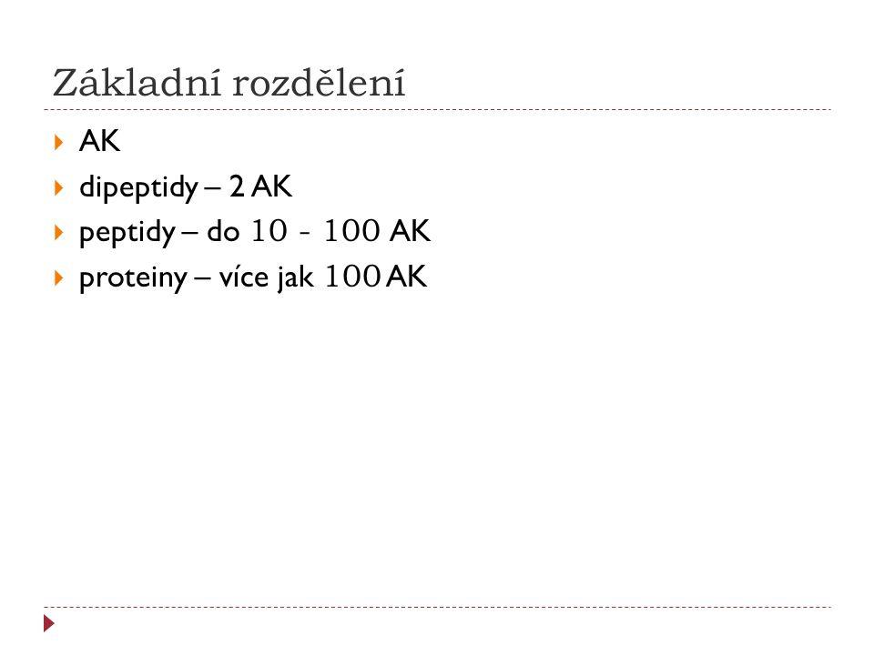 Základní rozdělení  AK  dipeptidy – 2 AK  peptidy – do 10 - 100 AK  proteiny – více jak 100 AK