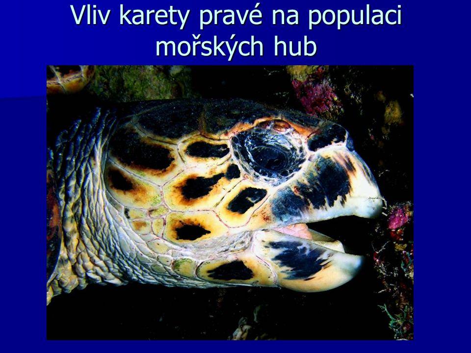 Vliv karety pravé na populaci mořských hub