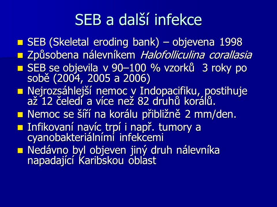 SEB a další infekce SEB (Skeletal eroding bank) – objevena 1998 SEB (Skeletal eroding bank) – objevena 1998 Způsobena nálevníkem Halofolliculina coral