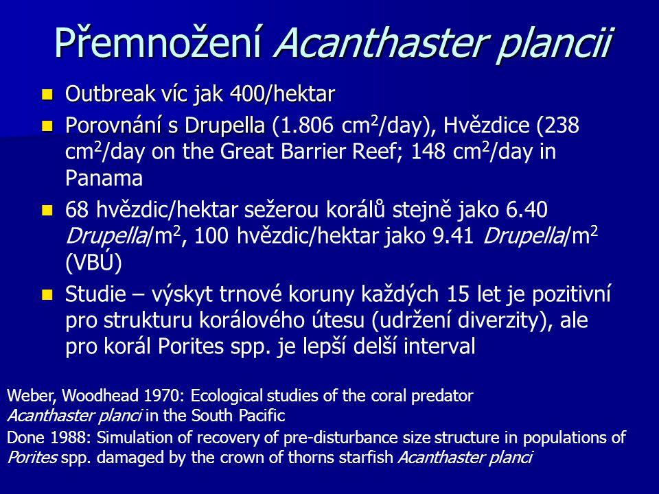 Přemnožení Acanthaster plancii Outbreak víc jak 400/hektar Outbreak víc jak 400/hektar Porovnání s Drupella Porovnání s Drupella (1.806 cm 2 /day), Hv