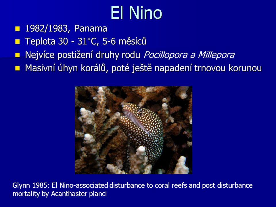 El Nino 1982/1983, Panama 1982/1983, Panama Teplota 30 - 31°C, 5-6 měsíců Teplota 30 - 31°C, 5-6 měsíců Nejvíce postižení druhy rodu Nejvíce postižení