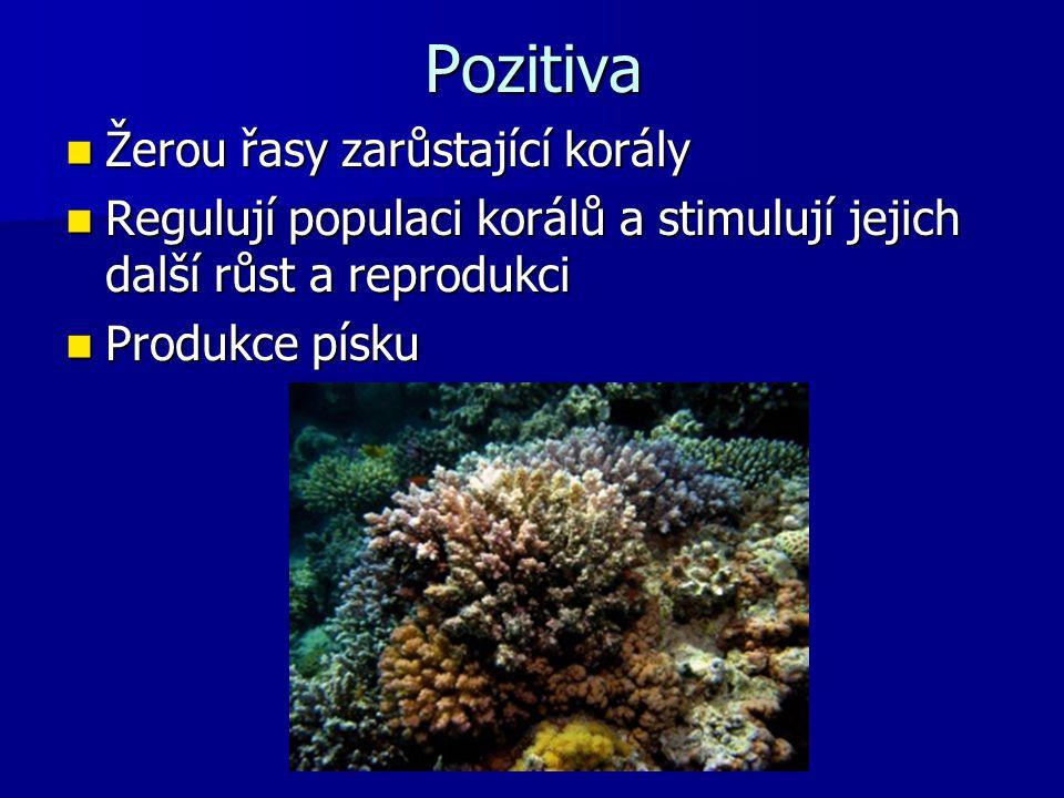 Pozitiva Žerou řasy zarůstající korály Žerou řasy zarůstající korály Regulují populaci korálů a stimulují jejich další růst a reprodukci Regulují popu