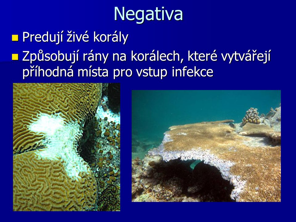 Negativa Predují živé korály Predují živé korály Způsobují rány na korálech, které vytvářejí příhodná místa pro vstup infekce Způsobují rány na korále