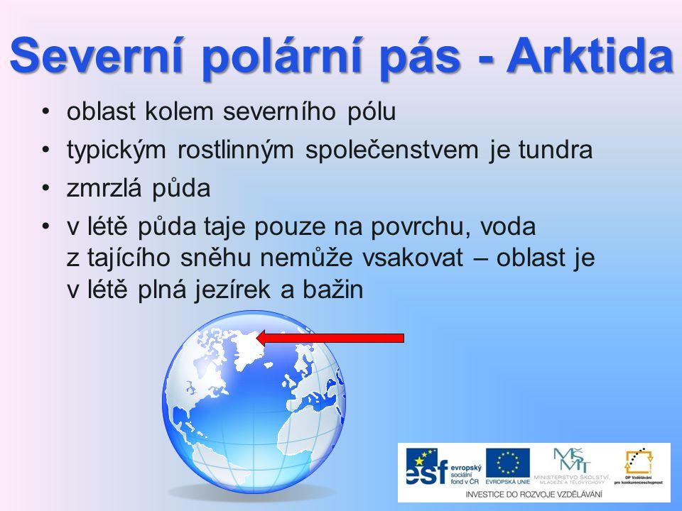 Severní polární pás - Arktida oblast kolem severního pólu typickým rostlinným společenstvem je tundra zmrzlá půda v létě půda taje pouze na povrchu, voda z tajícího sněhu nemůže vsakovat – oblast je v létě plná jezírek a bažin