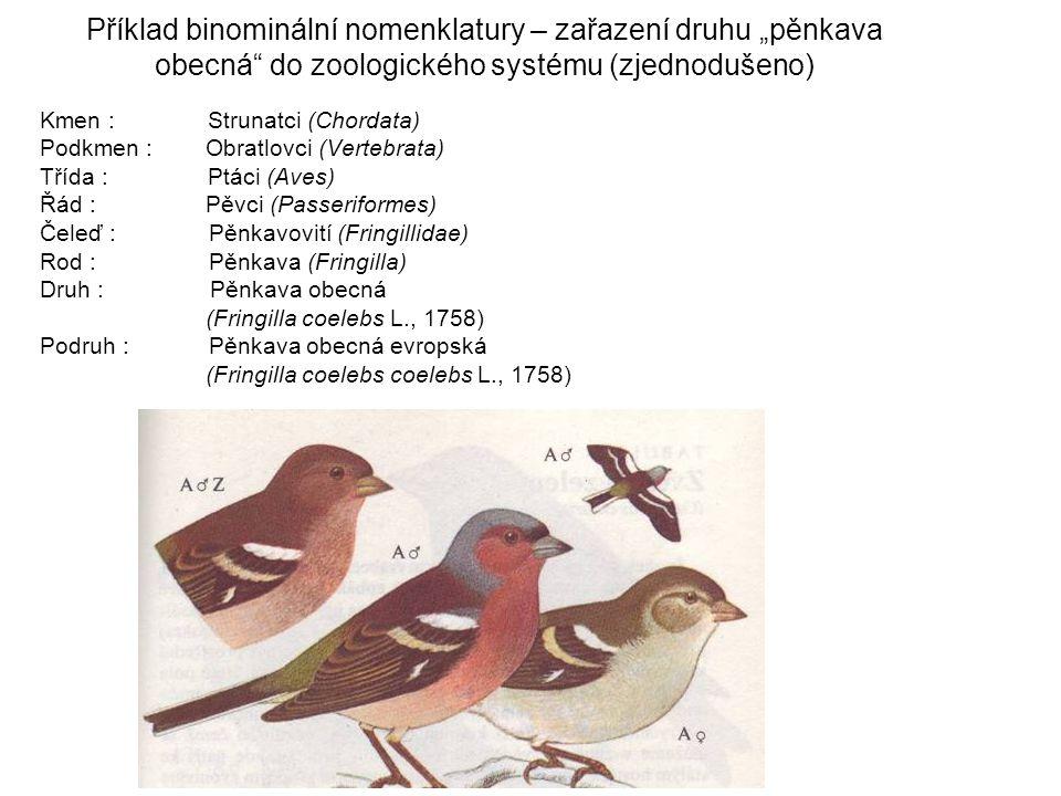 """Příklad binominální nomenklatury – zařazení druhu """"pěnkava obecná do zoologického systému (zjednodušeno) Kmen : Strunatci (Chordata) Podkmen : Obratlovci (Vertebrata) Třída : Ptáci (Aves) Řád : Pěvci (Passeriformes) Čeleď : Pěnkavovití (Fringillidae) Rod : Pěnkava (Fringilla) Druh : Pěnkava obecná (Fringilla coelebs L., 1758) Podruh : Pěnkava obecná evropská (Fringilla coelebs coelebs L., 1758)"""