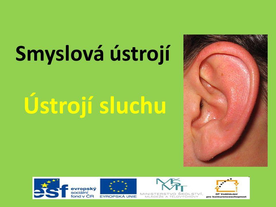 Smyslová ústrojí Ústrojí sluchu