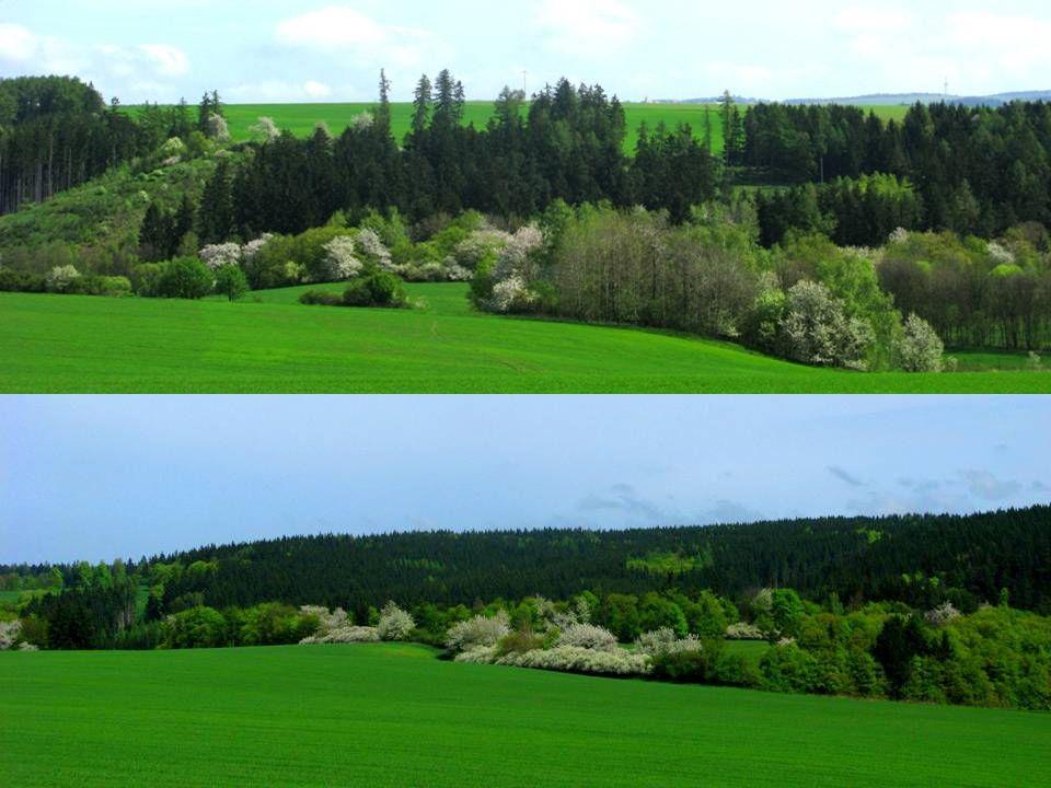Krásná příroda v okolních lesích