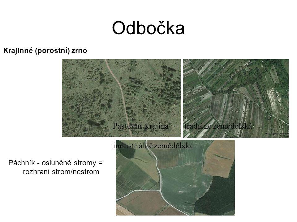 Pastevní krajina tradičně zemědělská industriálně zemědělská Krajinné (porostní) zrno Páchník - osluněné stromy = rozhraní strom/nestrom Odbočka