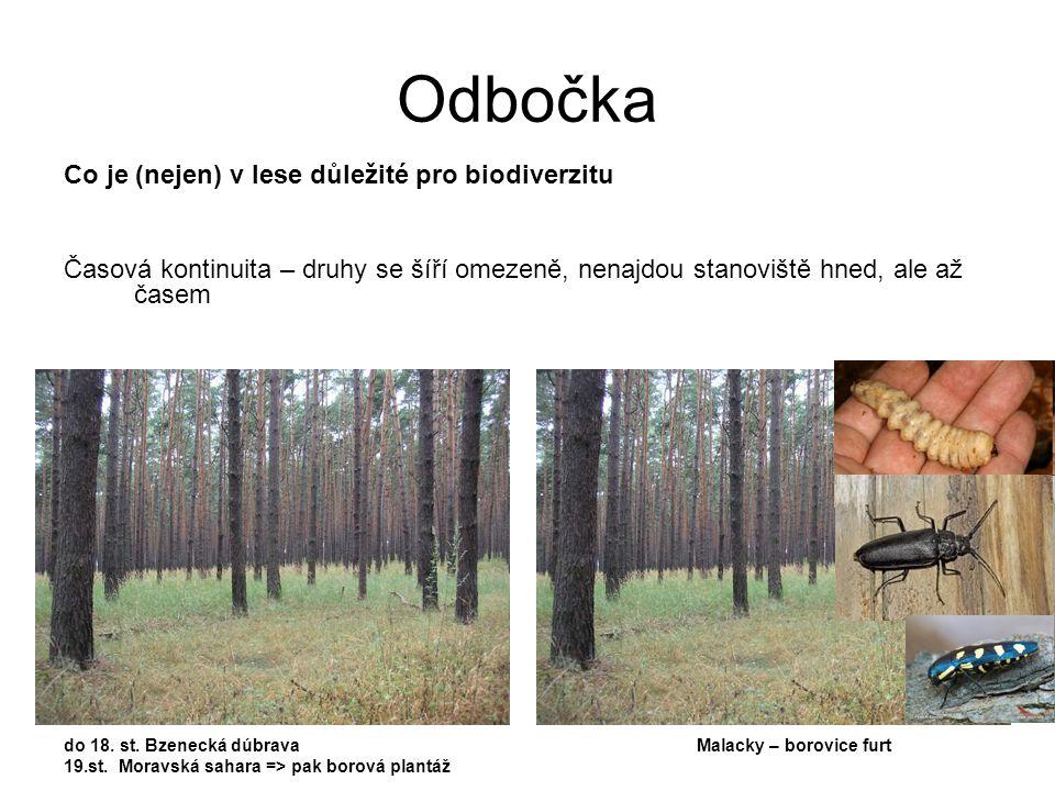 Co je (nejen) v lese důležité pro biodiverzitu Časová kontinuita – druhy se šíří omezeně, nenajdou stanoviště hned, ale až časem do 18. st. Bzenecká d