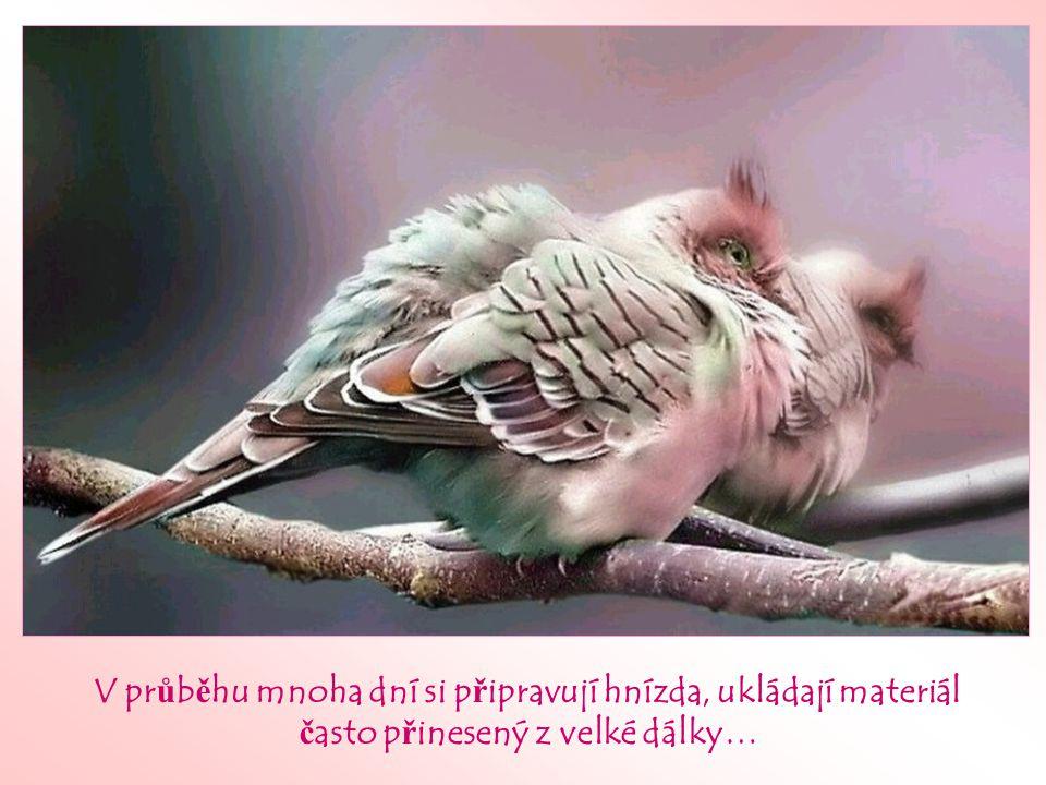 Pozoroval jsi n ě kdy chování pták ů, když se jim neda ř í?
