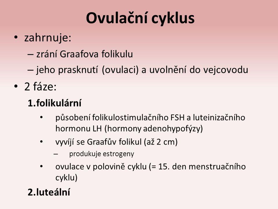 Ovulační cyklus zahrnuje: – zrání Graafova folikulu – jeho prasknutí (ovulaci) a uvolnění do vejcovodu 2 fáze: 1.folikulární působení folikulostimulač