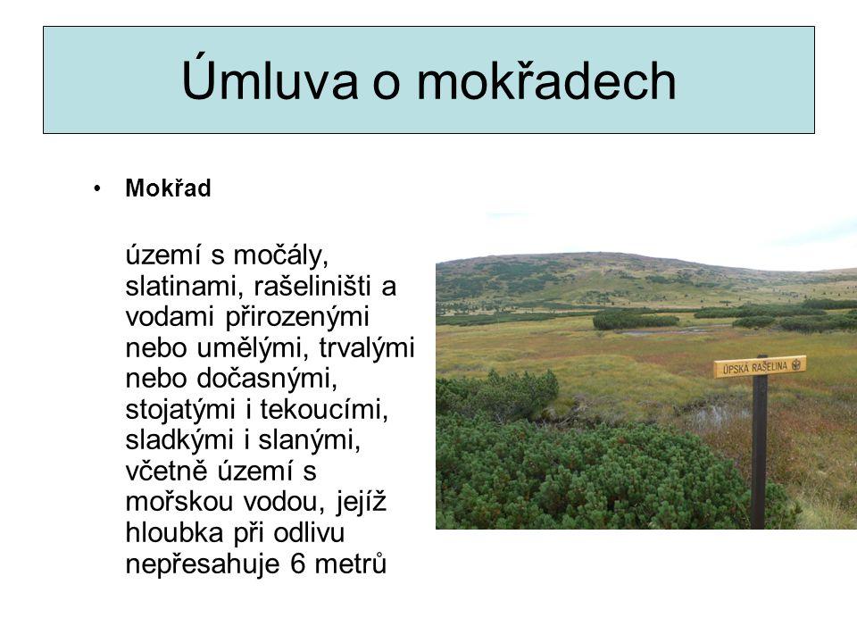 Úmluva o mokřadech Mokřad území s močály, slatinami, rašeliništi a vodami přirozenými nebo umělými, trvalými nebo dočasnými, stojatými i tekoucími, sl