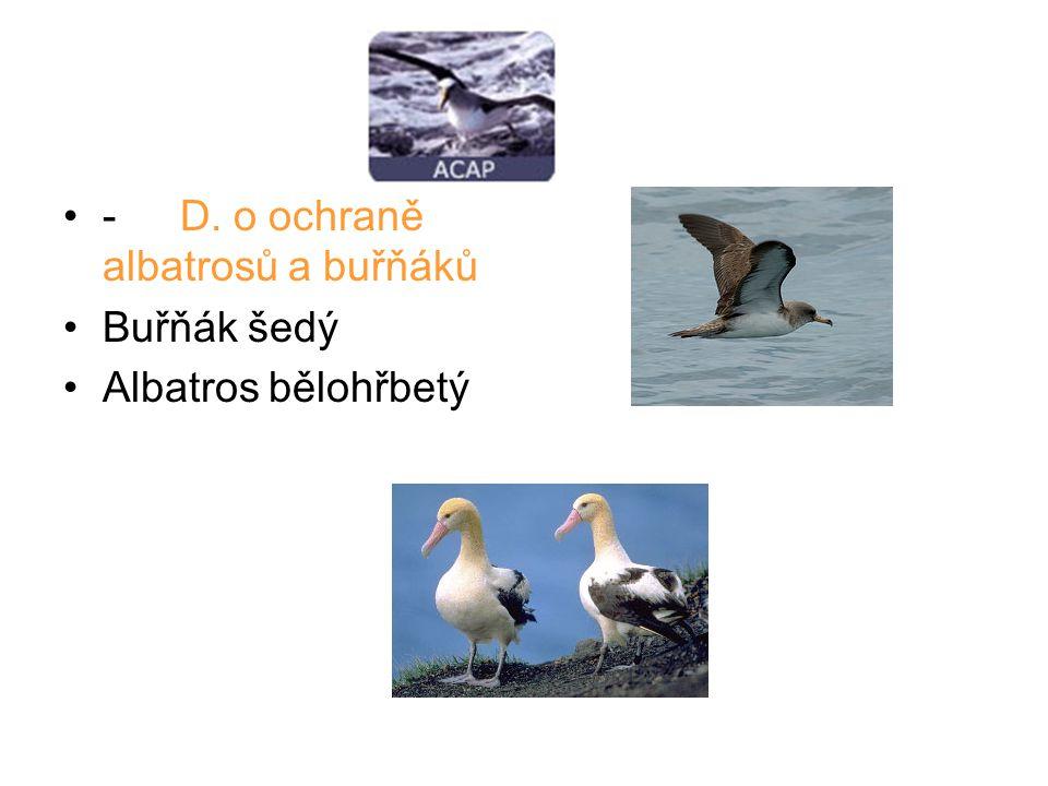 - D. o ochraně albatrosů a buřňáků Buřňák šedý Albatros bělohřbetý