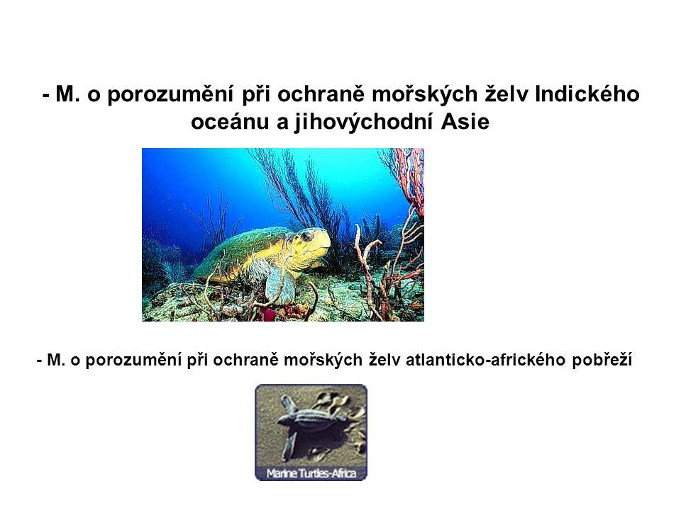 - M. o porozumění při ochraně mořských želv Indického oceánu a jihovýchodní Asie - M. o porozumění při ochraně mořských želv atlanticko-afrického pobř