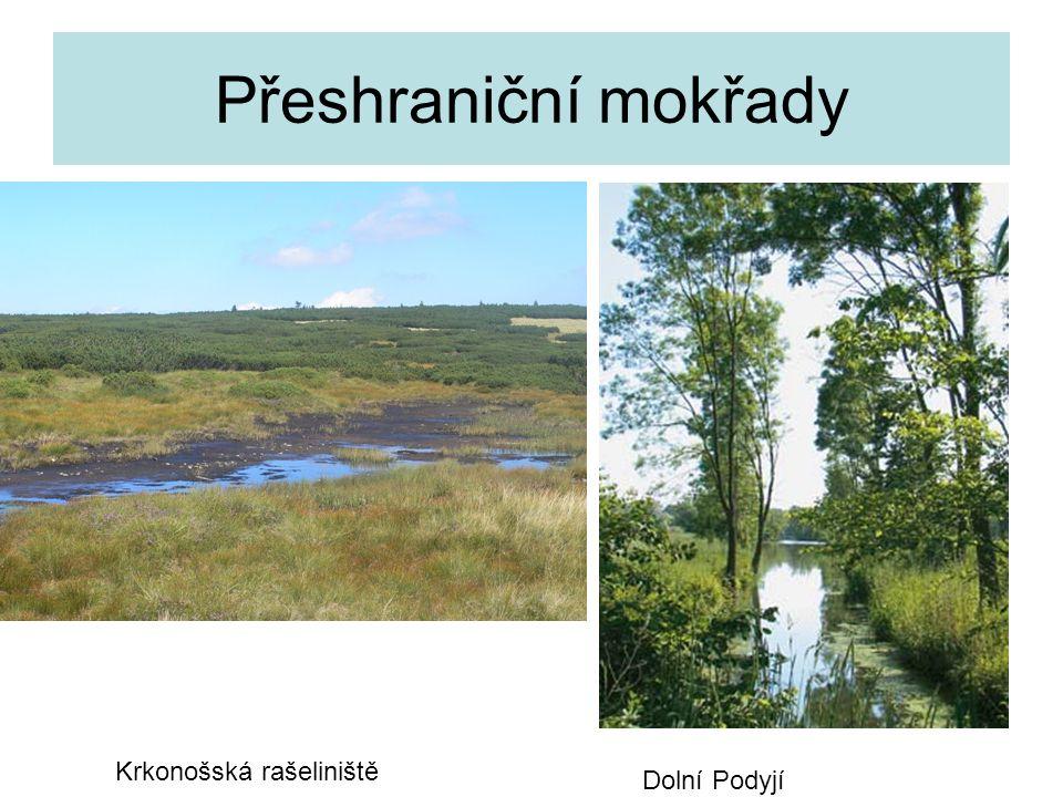 Přeshraniční mokřady Krkonošská rašeliniště Dolní Podyjí