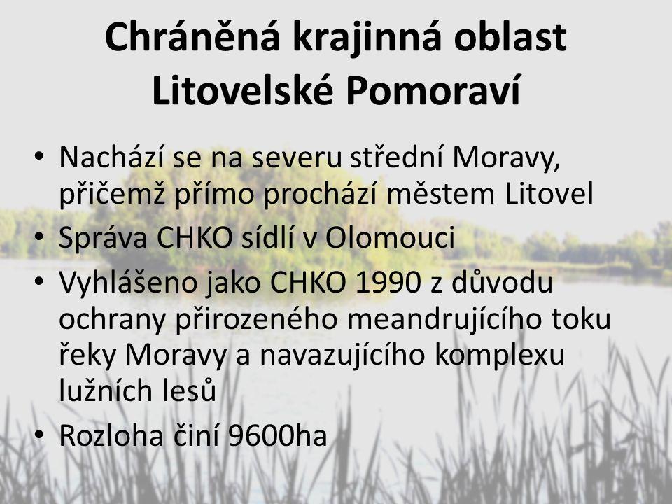 Chráněná krajinná oblast Litovelské Pomoraví Nachází se na severu střední Moravy, přičemž přímo prochází městem Litovel Správa CHKO sídlí v Olomouci V
