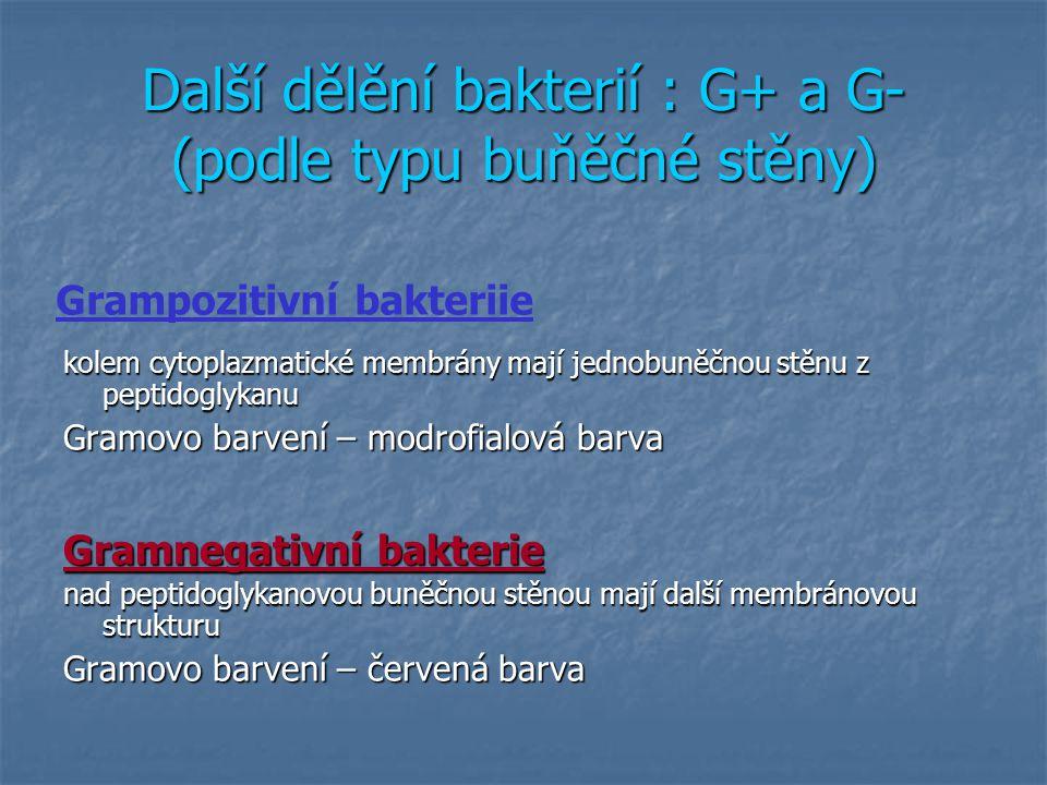 Diferenciální Gramovo barvení: G+(modré) a G- buňky (růžové) pro srovnání v jednom preparátu