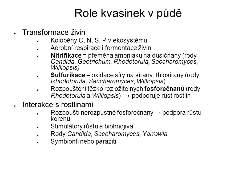 ● Transformace živin ● Koloběhy C, N, S, P v ekosystému ● Aerobní respirace i fermentace živin ● Nitrifikace = přeměna amoniaku na dusičnany (rody Candida, Geotrichum, Rhodotorula, Saccharomyces, Williopsis) ● Sulfurikace = oxidace síry na sírany, thiosírany (rody Rhodotorula, Saccharomyces, Williopsis) ● Rozpouštění těžko rozložitelných fosforečnanů (rody Rhodotorula a Williopsis) → podporuje růst rostlin ● Interakce s rostlinami ● Rozpouští nerozpustné fosforečnany → podpora růstu kořenů ● Stimulátory růstu a biohnojiva ● Rody Candida, Saccharomyces, Yarrowia ● Symbionti nebo paraziti Role kvasinek v půdě