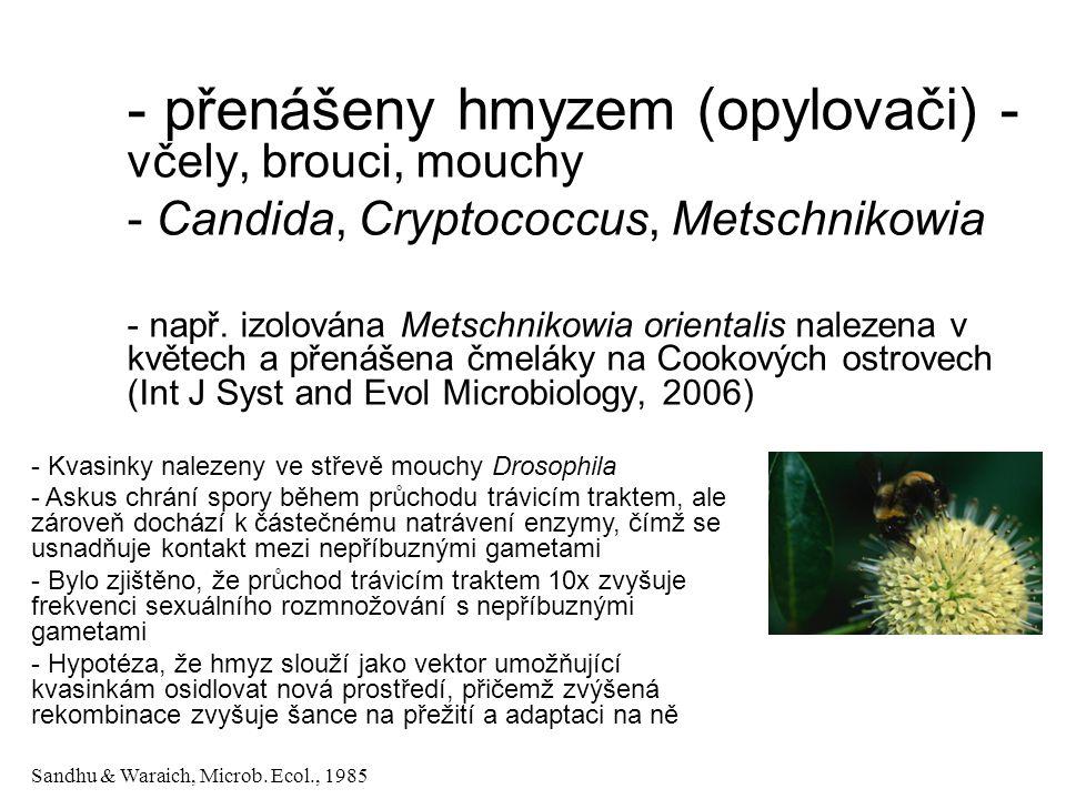 - přenášeny hmyzem (opylovači) - včely, brouci, mouchy - Candida, Cryptococcus, Metschnikowia - např.