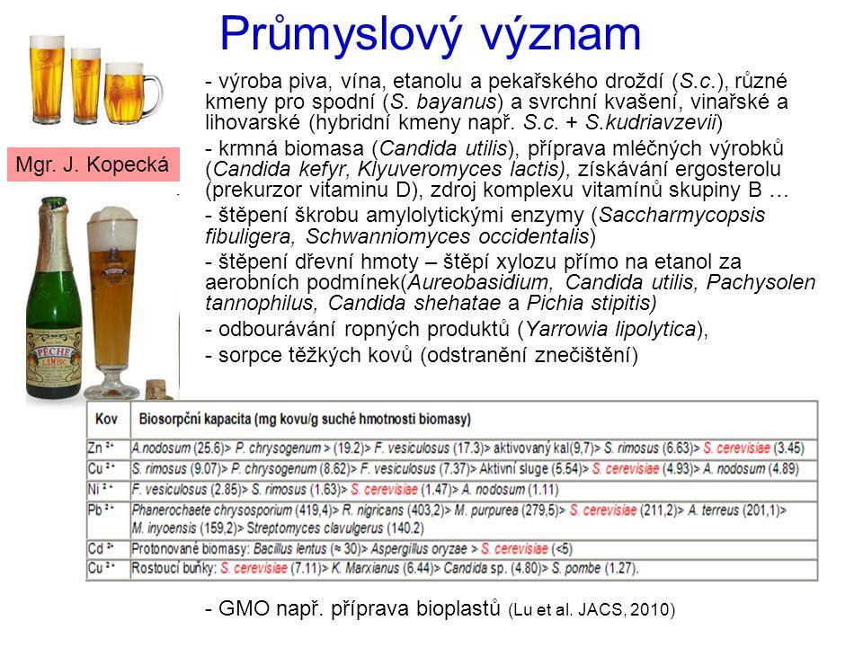 Průmyslový význam - výroba piva, vína, etanolu a pekařského droždí (S.c.), různé kmeny pro spodní (S.
