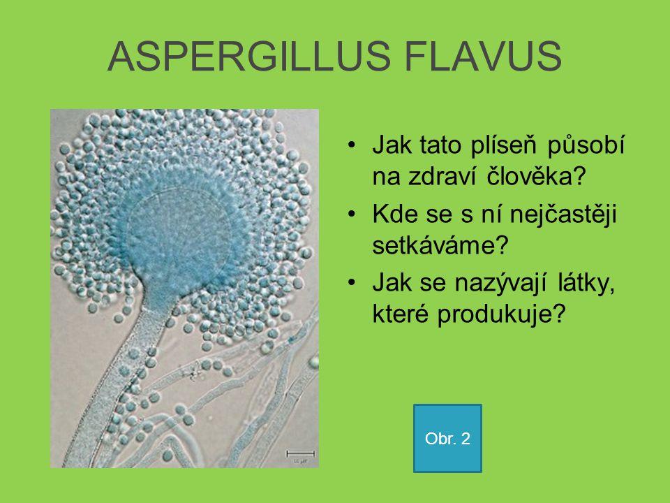 ASPERGILLUS FLAVUS Jak tato plíseň působí na zdraví člověka? Kde se s ní nejčastěji setkáváme? Jak se nazývají látky, které produkuje? Obr. 2