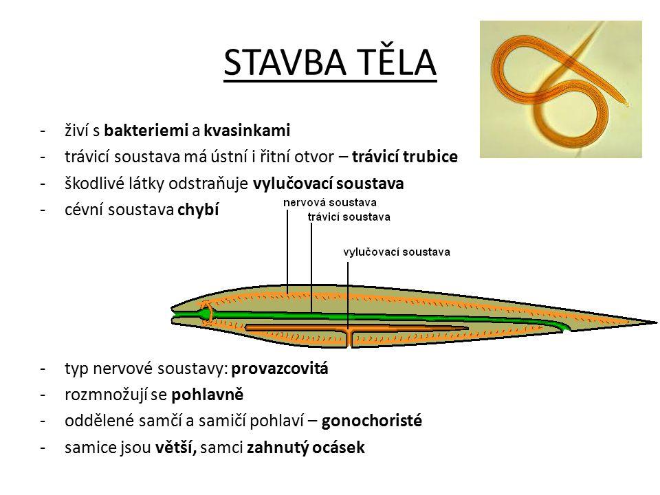 STAVBA TĚLA -živí s bakteriemi a kvasinkami -trávicí soustava má ústní i řitní otvor – trávicí trubice -škodlivé látky odstraňuje vylučovací soustava -cévní soustava chybí -typ nervové soustavy: provazcovitá -rozmnožují se pohlavně -oddělené samčí a samičí pohlaví – gonochoristé -samice jsou větší, samci zahnutý ocásek