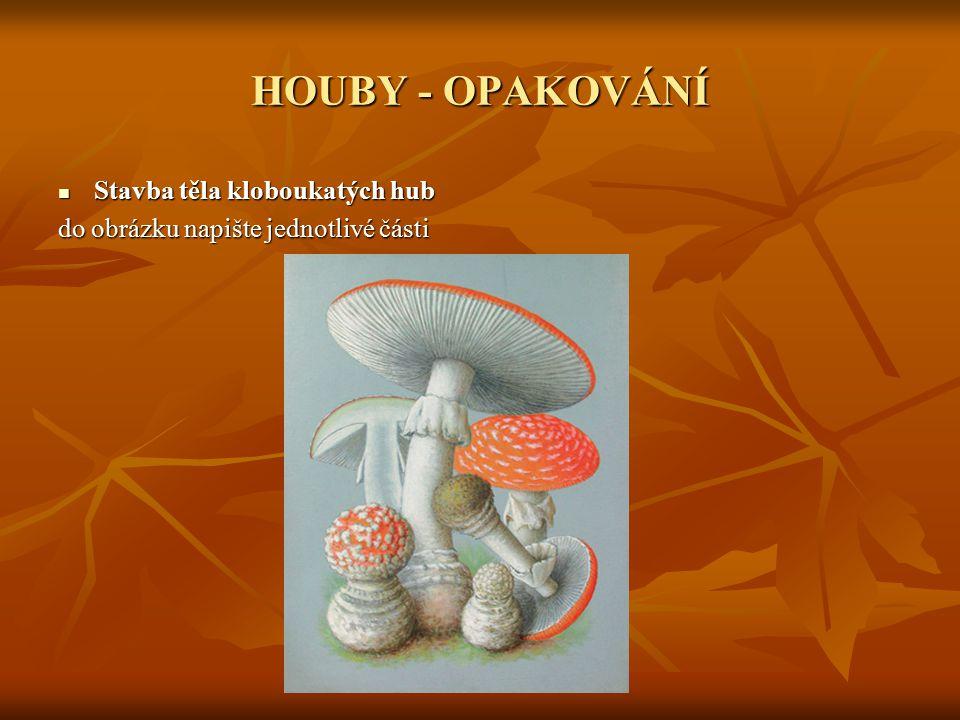 HOUBY - OPAKOVÁNÍ Stavba těla kloboukatých hub Stavba těla kloboukatých hub do obrázku napište jednotlivé části