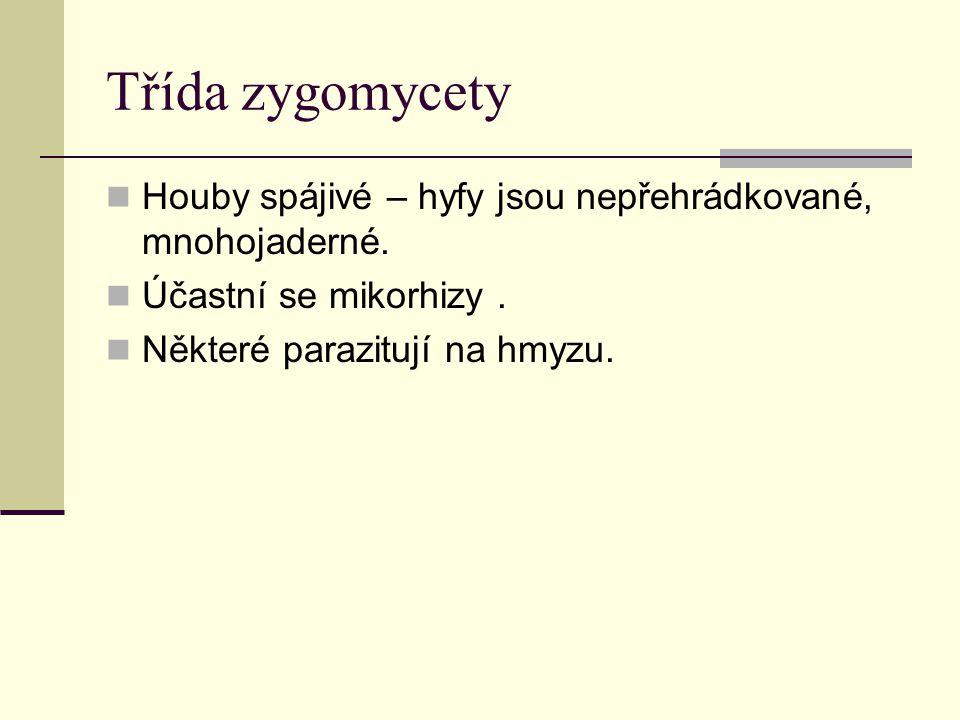 Třída zygomycety Houby spájivé – hyfy jsou nepřehrádkované, mnohojaderné. Účastní se mikorhizy. Některé parazitují na hmyzu.