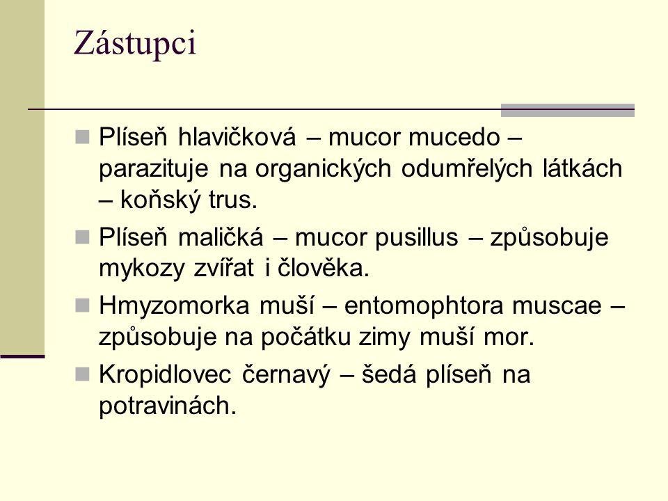 Zástupci Plíseň hlavičková – mucor mucedo – parazituje na organických odumřelých látkách – koňský trus. Plíseň maličká – mucor pusillus – způsobuje my