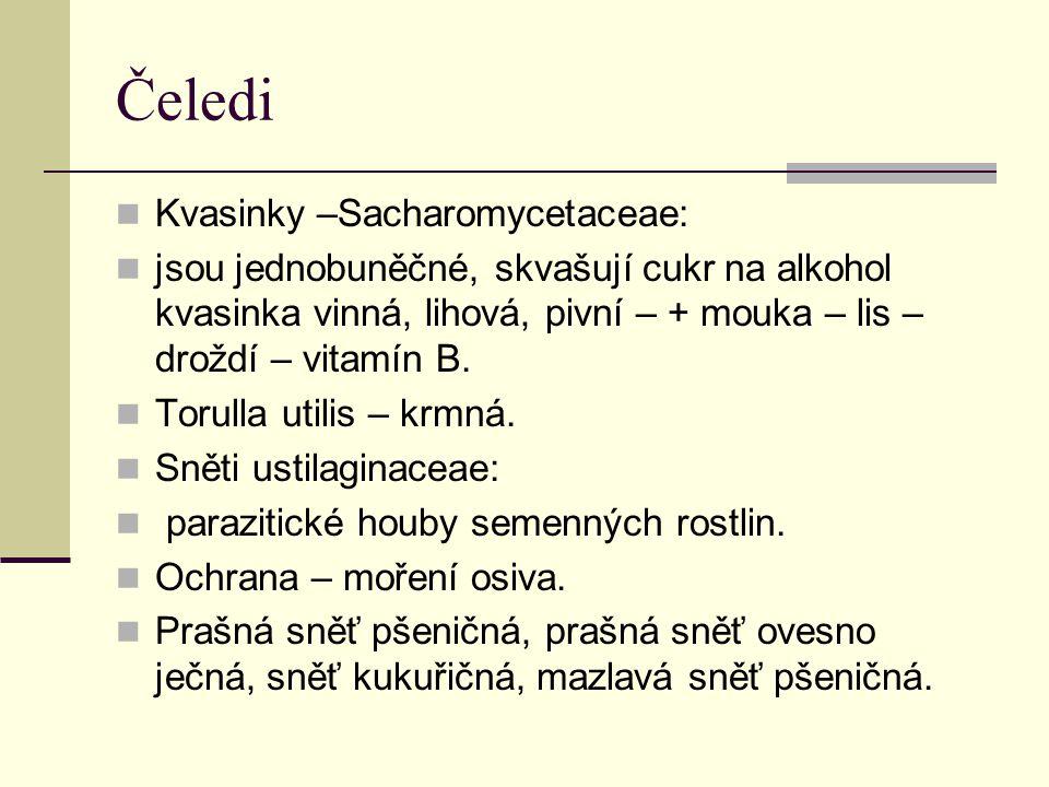 Čeledi Kvasinky –Sacharomycetaceae: jsou jednobuněčné, skvašují cukr na alkohol kvasinka vinná, lihová, pivní – + mouka – lis – droždí – vitamín B. To