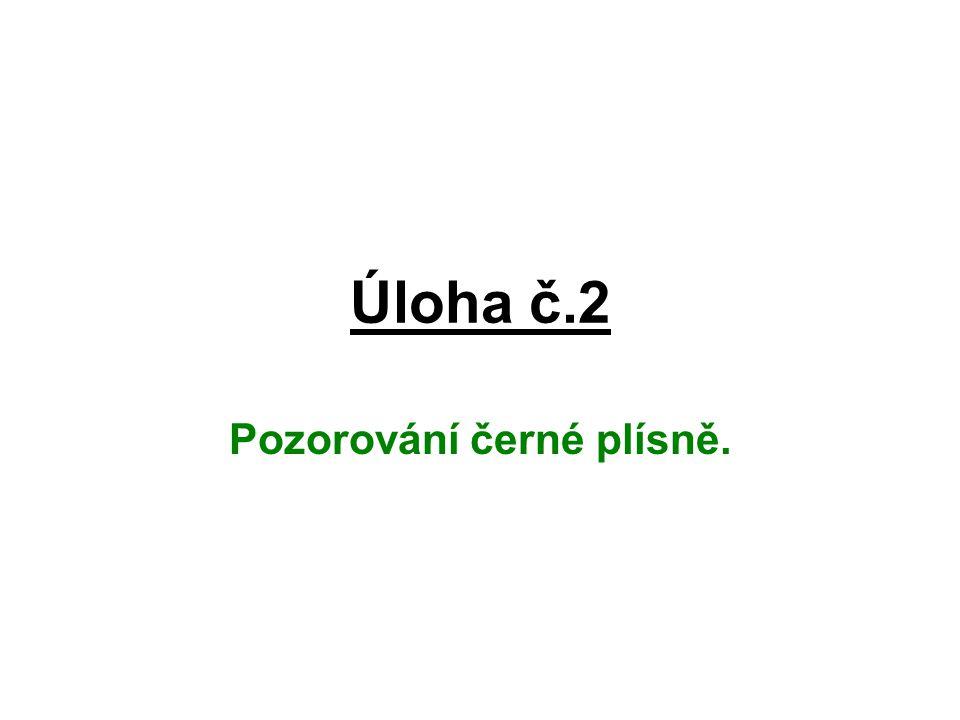 Úloha č.2 Pozorování černé plísně.