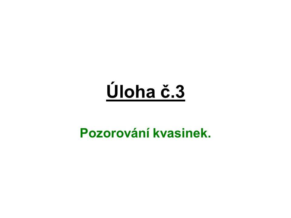 Úloha č.3 Pozorování kvasinek.