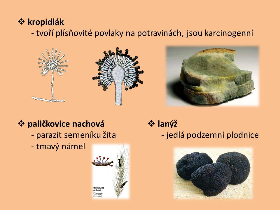  kropidlák - tvoří plísňovité povlaky na potravinách, jsou karcinogenní  paličkovice nachová - parazit semeníku žita - tmavý námel  lanýž - jedlá p