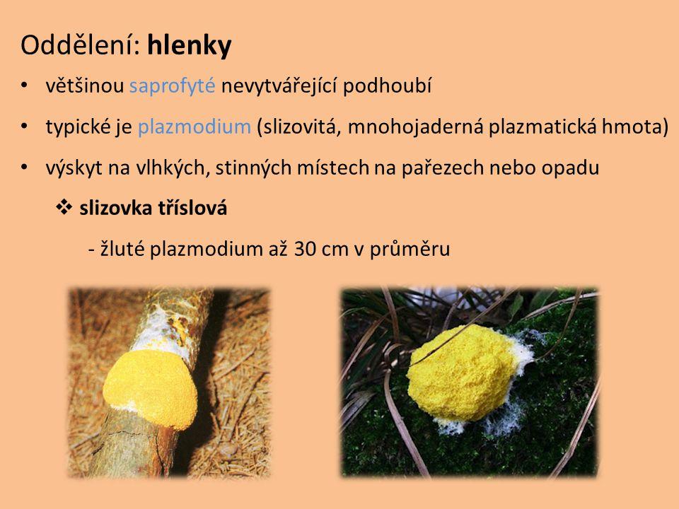 Oddělení: hlenky většinou saprofyté nevytvářející podhoubí typické je plazmodium (slizovitá, mnohojaderná plazmatická hmota) výskyt na vlhkých, stinný