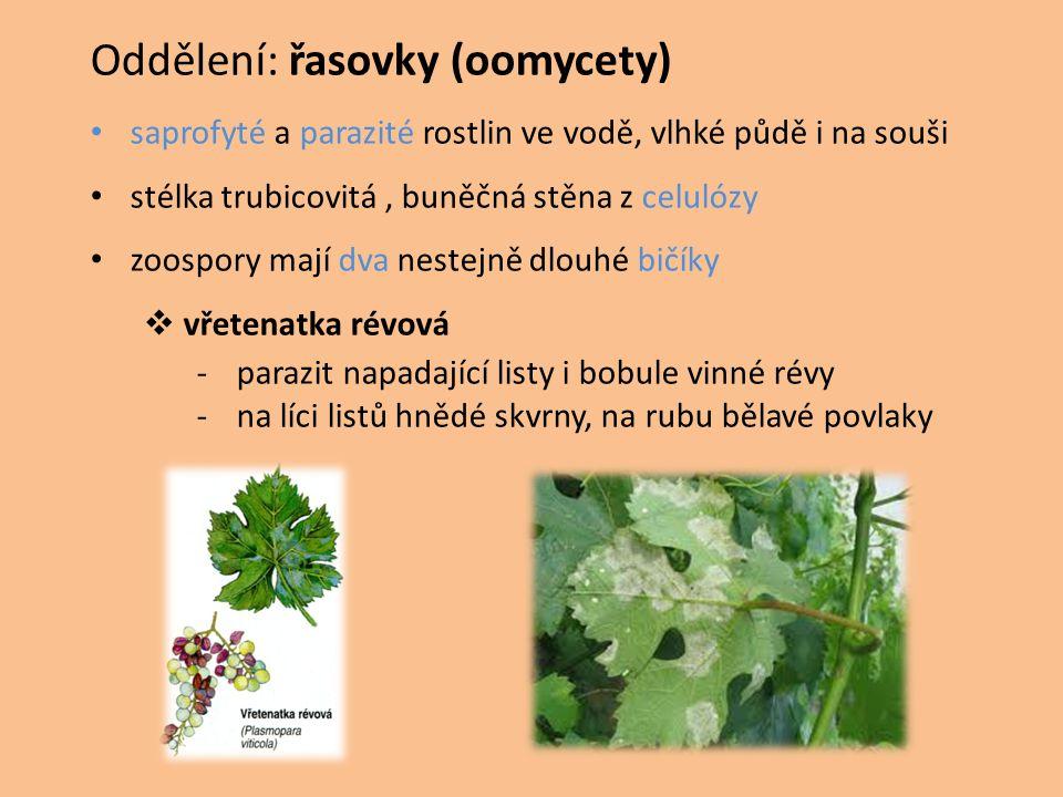 plíseň bramborová -parazit lilkovitých rostlin (brambory, rajčata aj.) -na líci listů tmavě hnědé skvrny, na rubu bělavé povlaky -hlízy hnědé a scvrklé  plíseň buková -parazit bukových semenáčků -hnědé skvrny na děložních lístcích