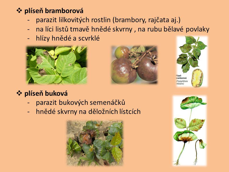  plíseň bramborová -parazit lilkovitých rostlin (brambory, rajčata aj.) -na líci listů tmavě hnědé skvrny, na rubu bělavé povlaky -hlízy hnědé a scvr