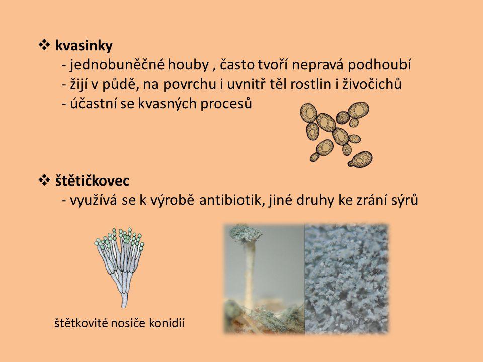  kvasinky - jednobuněčné houby, často tvoří nepravá podhoubí - žijí v půdě, na povrchu i uvnitř těl rostlin i živočichů - účastní se kvasných procesů
