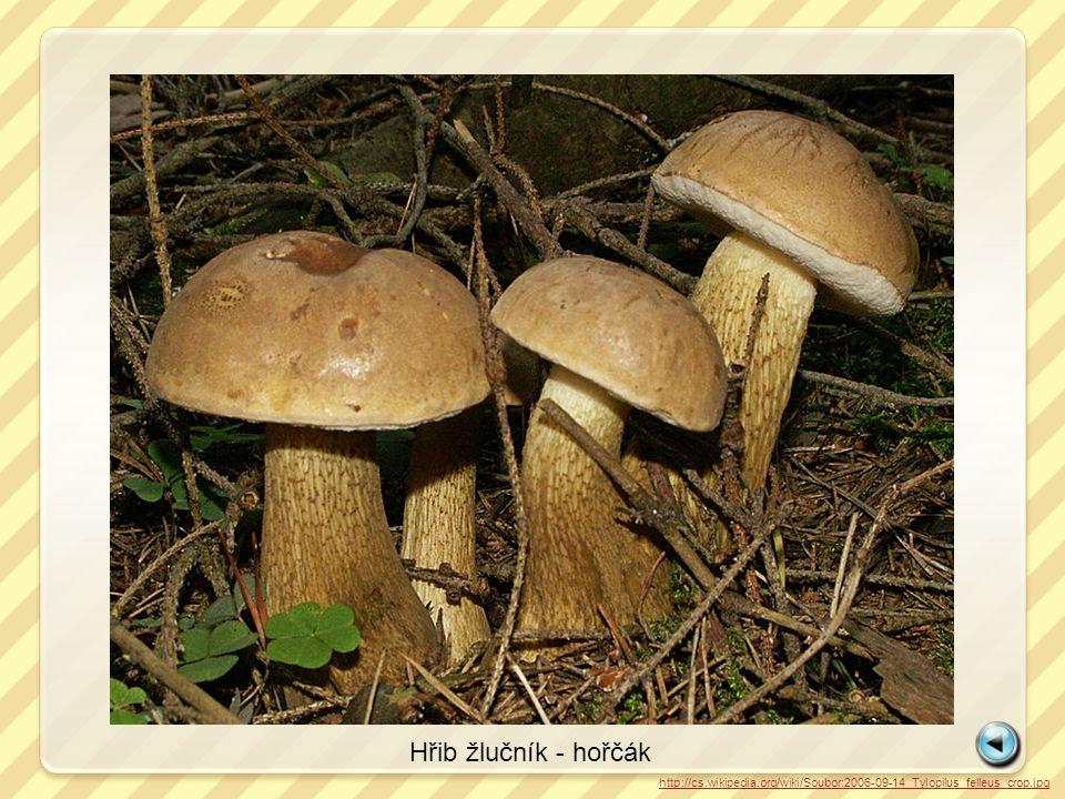 http://cs.wikipedia.org/wiki/Soubor:2006-09-14_Tylopilus_felleus_crop.jpg Hřib žlučník - hořčák