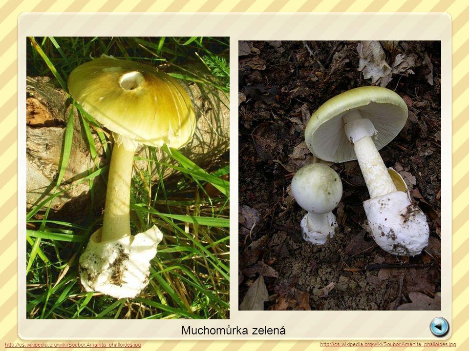 http://cs.wikipedia.org/wiki/Soubor:Amanita_phalloides.jpg Muchomůrka zelená