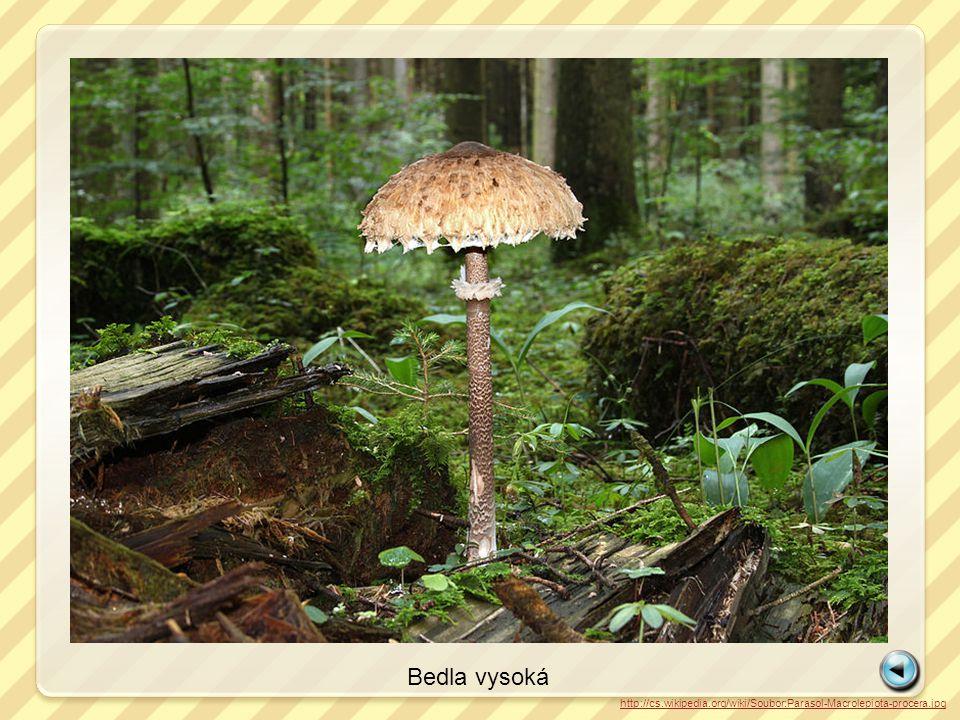 http://cs.wikipedia.org/wiki/Soubor:Fichten-Reizker_Lactarius_deterrimus.jpg Ryzec smrkový