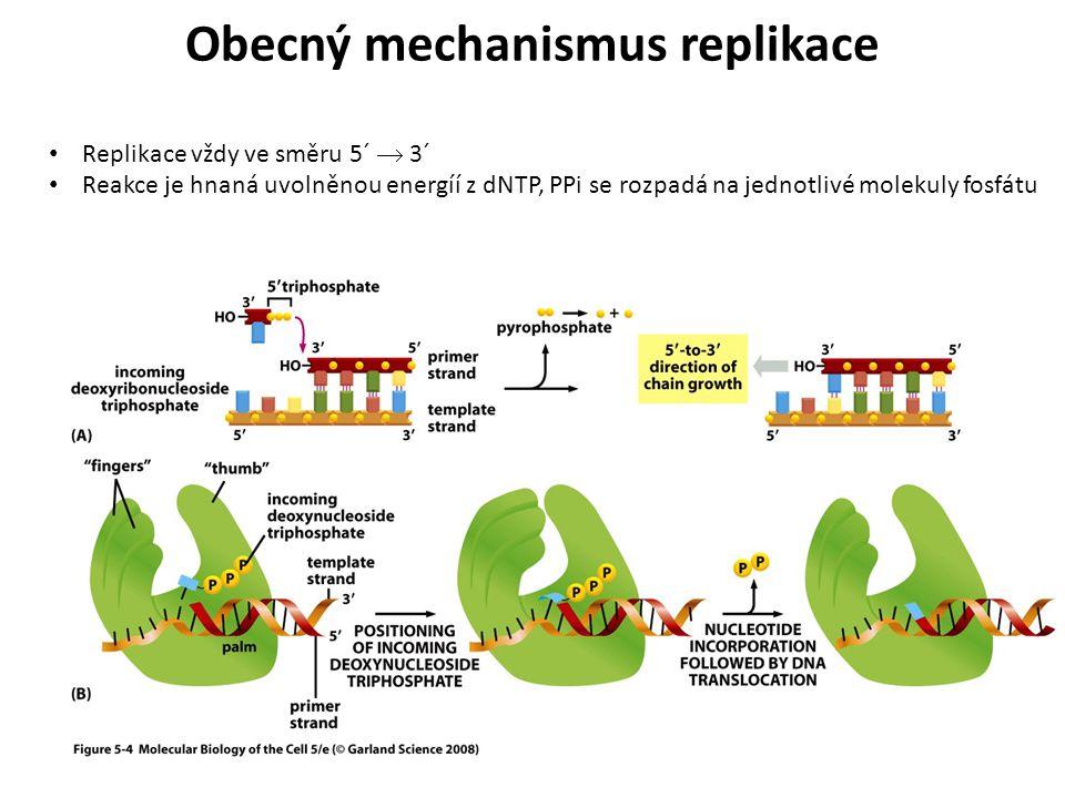 Replikace vždy ve směru 5´  3´ Reakce je hnaná uvolněnou energíí z dNTP, PPi se rozpadá na jednotlivé molekuly fosfátu Obecný mechanismus replikace