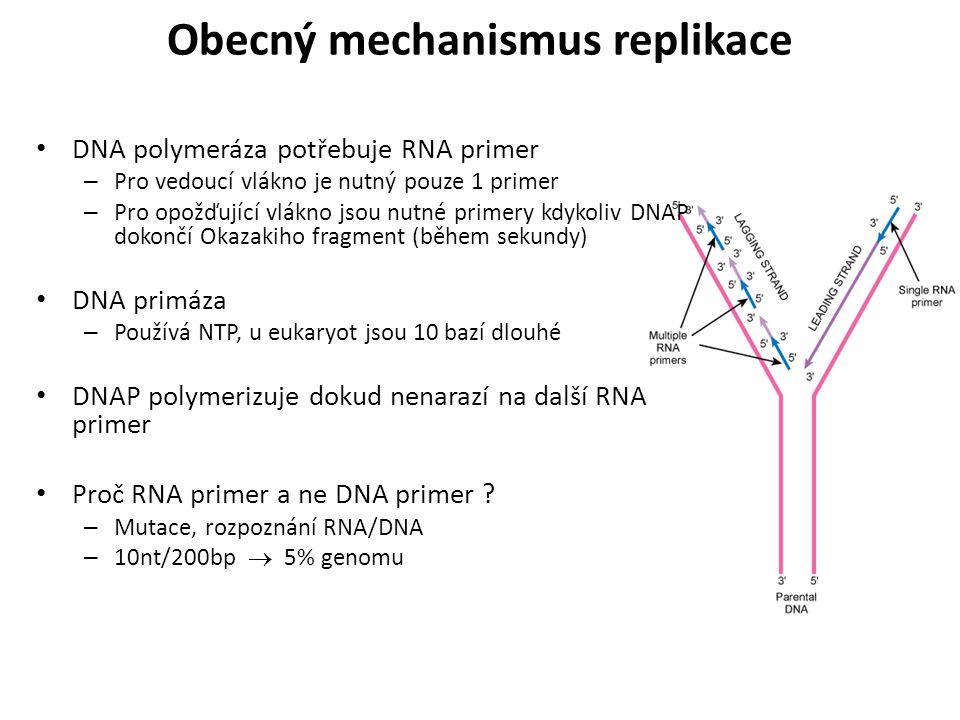 DNA polymeráza potřebuje RNA primer – Pro vedoucí vlákno je nutný pouze 1 primer – Pro opožďující vlákno jsou nutné primery kdykoliv DNAP dokončí Okaz
