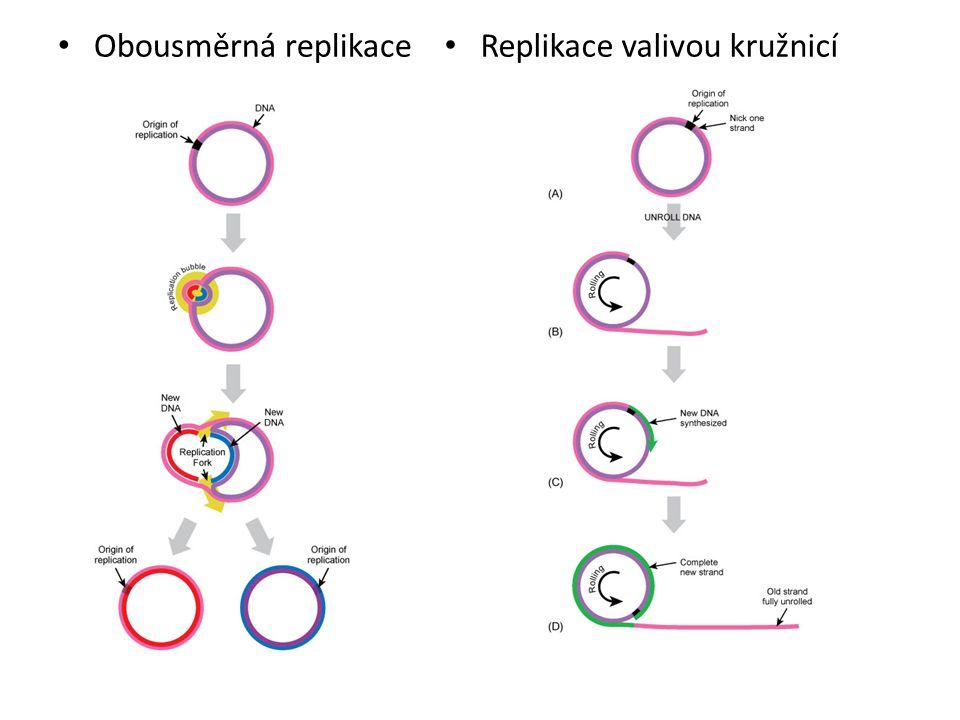 Obousměrná replikace Replikace valivou kružnicí