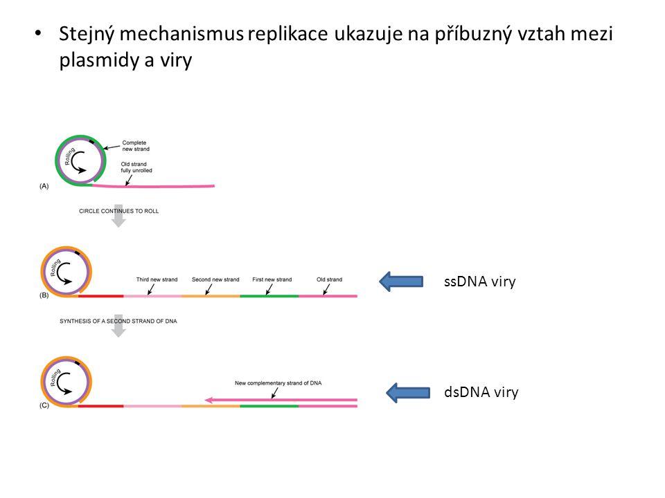 Stejný mechanismus replikace ukazuje na příbuzný vztah mezi plasmidy a viry ssDNA viry dsDNA viry