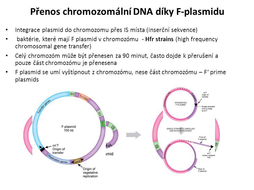 Integrace plasmid do chromozomu přes IS místa (inserční sekvence) baktérie, které mají F plasmid v chromozómu - Hfr strains (high frequency chromosoma