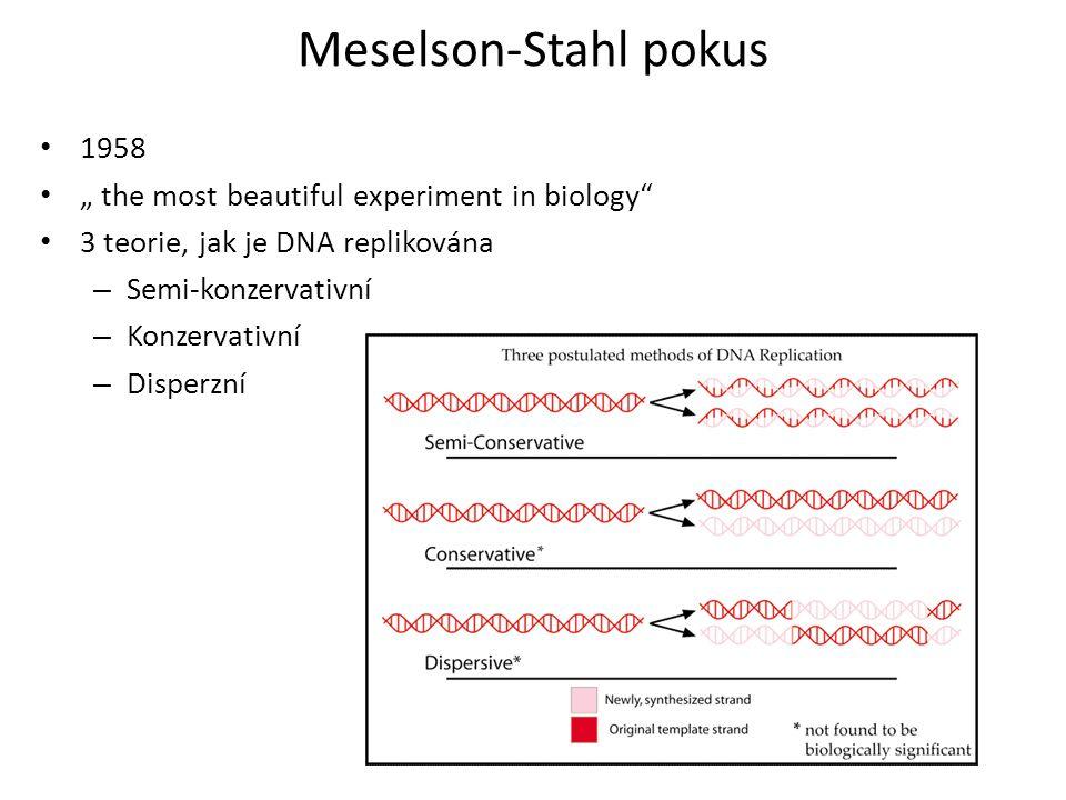"""Meselson-Stahl pokus 1958 """" the most beautiful experiment in biology"""" 3 teorie, jak je DNA replikována – Semi-konzervativní – Konzervativní – Disperzn"""