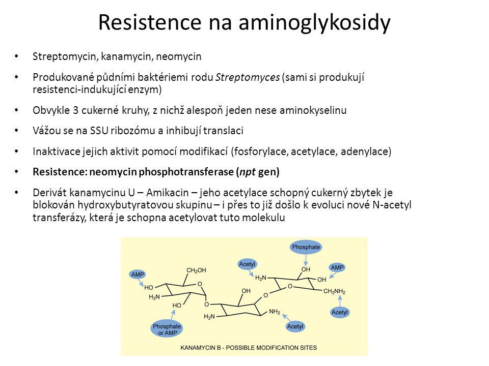 Resistence na aminoglykosidy Streptomycin, kanamycin, neomycin Produkované půdními baktériemi rodu Streptomyces (sami si produkují resistenci-indukují