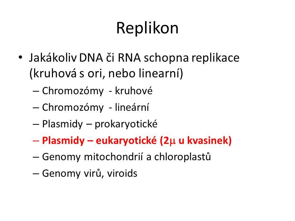Replikon Jakákoliv DNA či RNA schopna replikace (kruhová s ori, nebo linearní) – Chromozómy - kruhové – Chromozómy - lineární – Plasmidy – prokaryotic