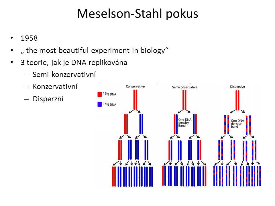 Meselson-Stahl pokus Těžký řetězec není detekován, Tato teorie není pravdivá Tím, že je lehký řetězec detekován, nemůže být tato teorier pravdivá