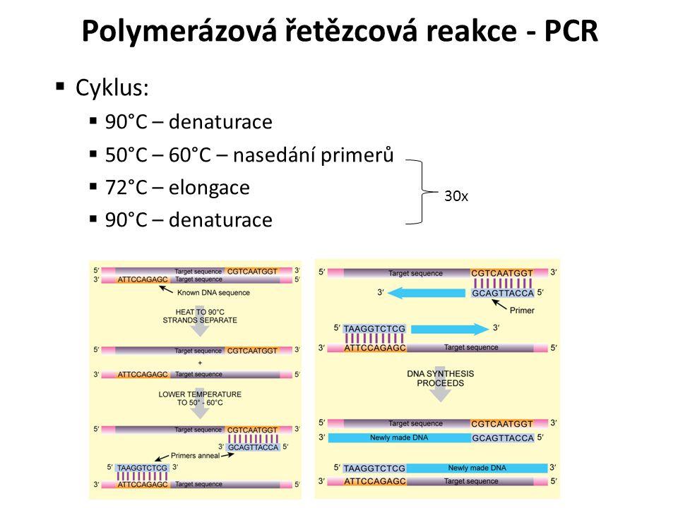  Cyklus:  90°C – denaturace  50°C – 60°C – nasedání primerů  72°C – elongace  90°C – denaturace 30x Polymerázová řetězcová reakce - PCR